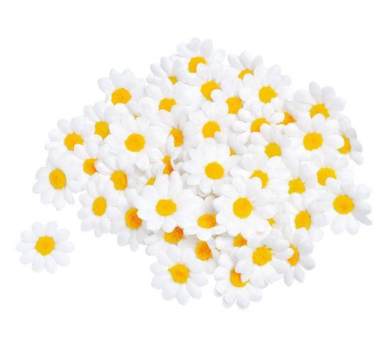 50 Margeritenblüten